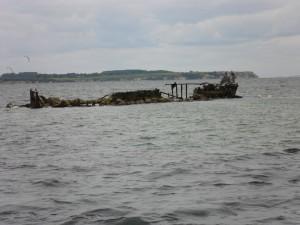 Versenktes Wrack mit Seeadlern vor Boltenhagen