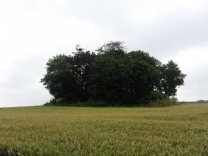 Hügelgrab bei Lütjenburg