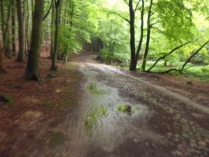 Radweg zum Königsstuhl