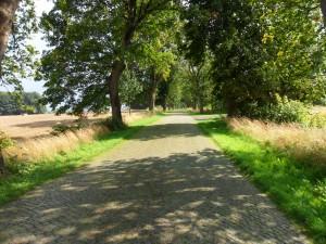 Straße zwischen Reinberg und Neuenkirchen