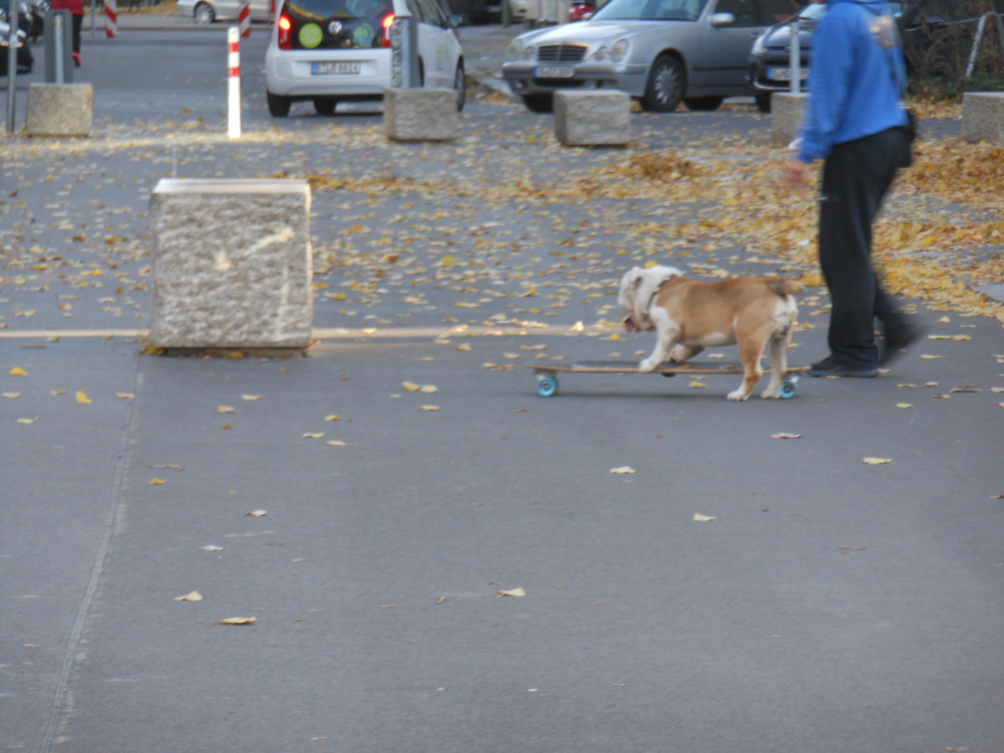 Skate-Dog